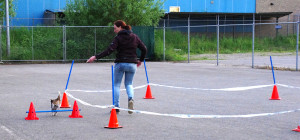 Sportcursussen